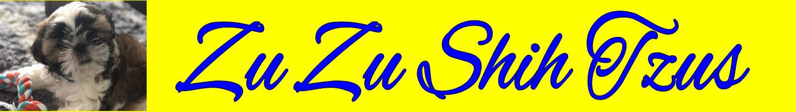 Zu Zu Shih Tzus